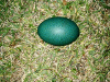 Beautiful Green Emu Eggs Blown Out And Cleaned